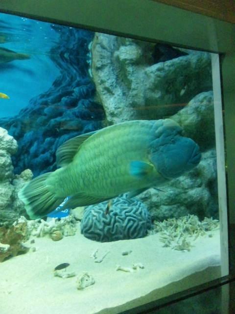 水族館に行きました